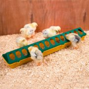 0001979_500mm-28-hole-chick-feeder